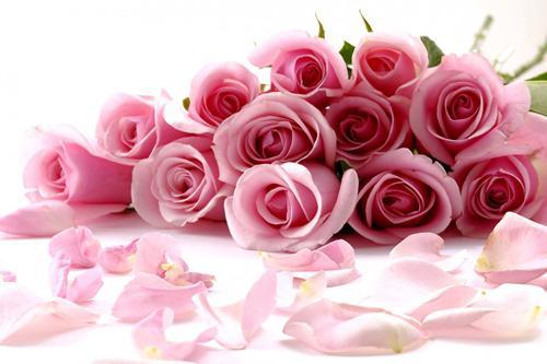 بالصور صور زهور اجمل صور زهور زهور جميلة , خلفيات رومانسية للورود حلوة 3774