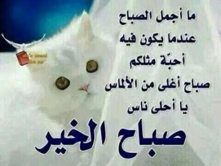 بالصور صور صباح الخير حلوة اجمل صور الصباح , كلمات صباحية علي بوستات 3775 3