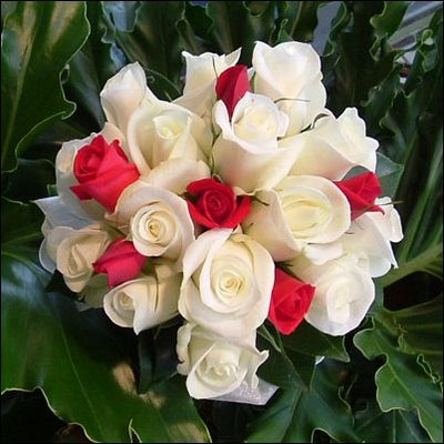 صوره صور ورود حمراء جديدة , صور باقات ورود زهور حمراء و بيضاء جديدة و رائعة