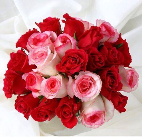 بالصور صور ورود حمراء جديدة , صور باقات ورود زهور حمراء و بيضاء جديدة و رائعة 3786 2
