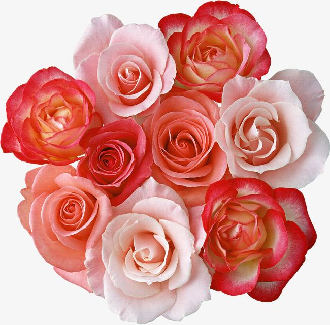 بالصور صور ورود حمراء جديدة , صور باقات ورود زهور حمراء و بيضاء جديدة و رائعة 3786 5