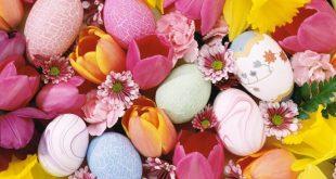 صور اجمل الزهور زهور رائعة صور ورد وازهار جميلة , بوستات طبيعية للزهرة