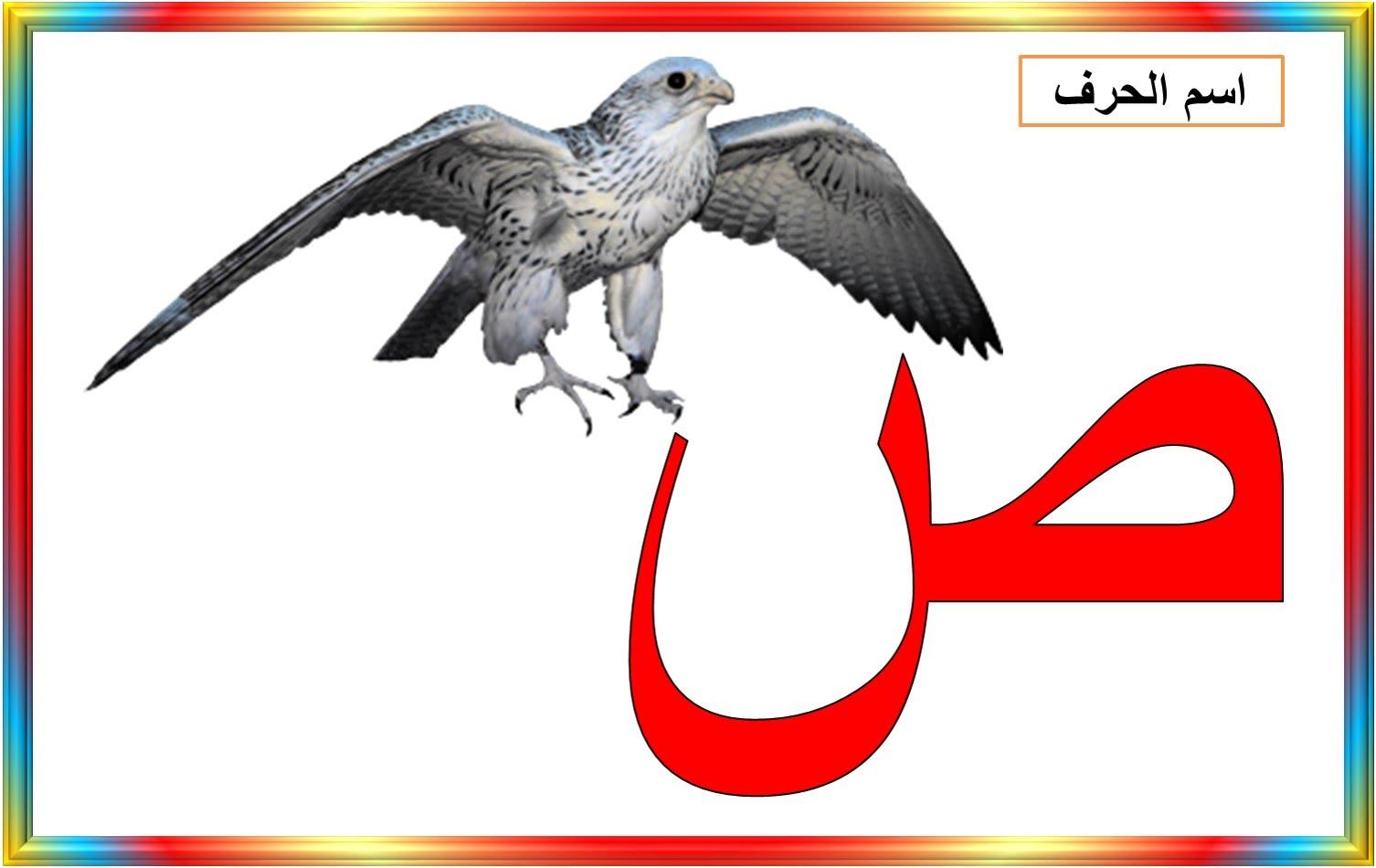 صوره صور خلفيات حرف الصاد روعه اقوى صور حرف الصاد , بوستات للحروف العربية