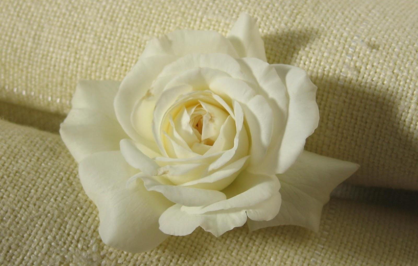 صور صور ورد ابيض روعه , خلفيات زهور بيضاء تجن