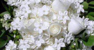 صور ورد ابيض روعه , خلفيات زهور بيضاء تجن