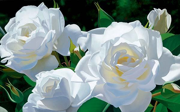 بالصور صور ورد ابيض روعه , خلفيات زهور بيضاء تجن 3809 4