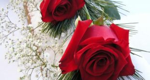 صوره صور ورود روعه خلفيات ورود جميلة اجمل الورود الحمراء , خلفيات وردة بلون الحب