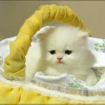صور متحركة صور قطط متحركة صور رقص متحركة صور متنوعة متحركة , صورة قطة تخبل