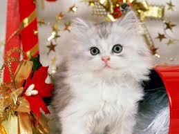 صوره صور خلفيات للكمبيوتر اجمل خلفيات قطط خلفيات جديدة قطط , اجمل خلفية صورة قطة تجنن