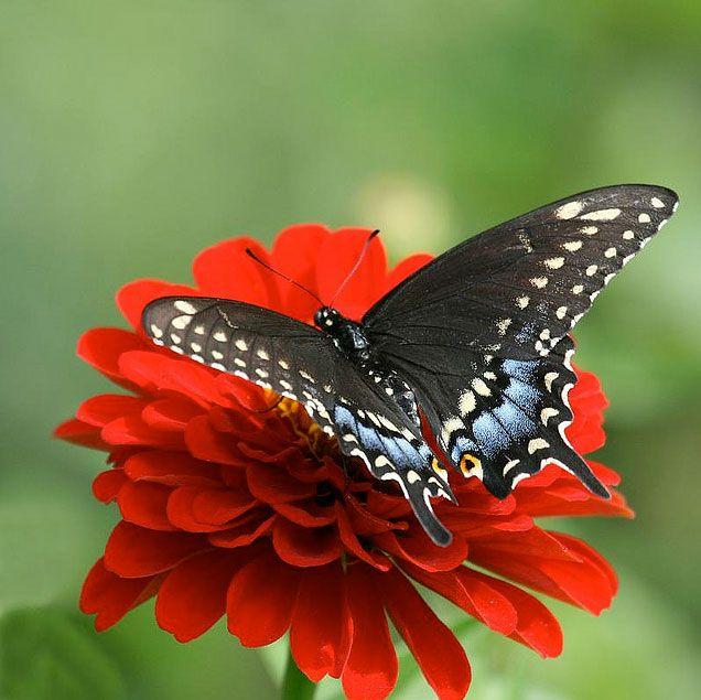 بالصور صور فراشات جميلة وزهور رقيقة , خلفيات رومانسية من الطبيعة 4319 2