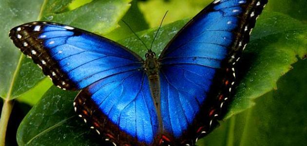 بالصور صور فراشات جميلة وزهور رقيقة , خلفيات رومانسية من الطبيعة 4319 3