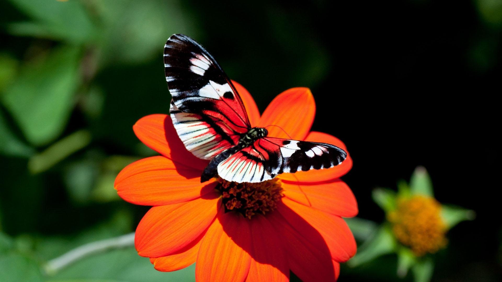 بالصور صور فراشات جميلة وزهور رقيقة , خلفيات رومانسية من الطبيعة 4319 5