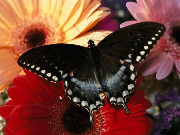 بالصور صور فراشات جميلة وزهور رقيقة , خلفيات رومانسية من الطبيعة 4319 6