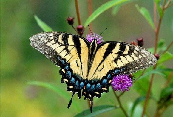 بالصور صور فراشات جميلة وزهور رقيقة , خلفيات رومانسية من الطبيعة 4319 7