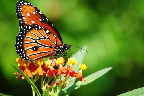 بالصور صور فراشات جميلة وزهور رقيقة , خلفيات رومانسية من الطبيعة 4319 8