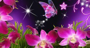 صور فراشات جميلة وزهور رقيقة , خلفيات رومانسية من الطبيعة