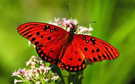 بالصور صور فراشات جميلة وزهور رقيقة , خلفيات رومانسية من الطبيعة
