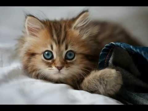 صور صور قطط صغيره قطط صغيره اجمل القطط صور قطط , اروع صورة قطة تجنن