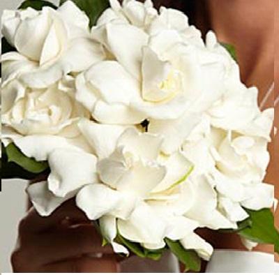 بالصور صور اجمل باقات الورد الابيض باقات ورد جوري ابيض , ورود لاصحاب القلب الابيض 4481 4
