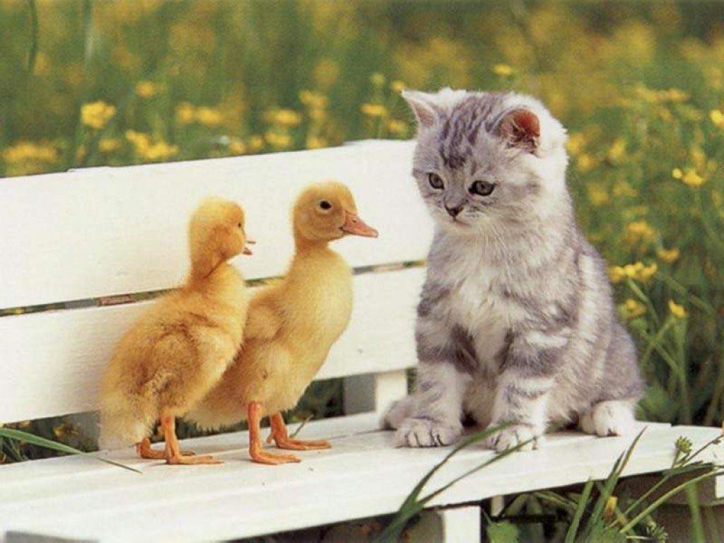 بالصور صور قطط مضحكة صور قطط تجنن , اجمل صورة لقطة تفطس من الضحك 4540 1