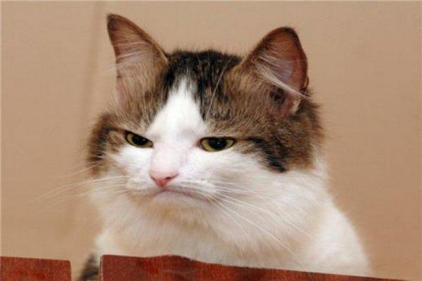 بالصور صور قطط مضحكة صور قطط تجنن , اجمل صورة لقطة تفطس من الضحك 4540 2