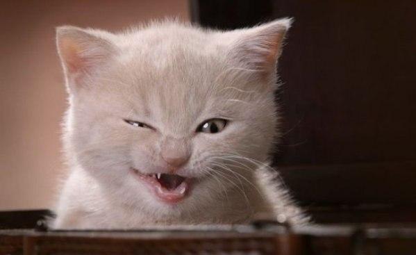 بالصور صور قطط مضحكة صور قطط تجنن , اجمل صورة لقطة تفطس من الضحك 4540 3