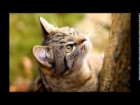 بالصور صور قطط مضحكة صور قطط تجنن , اجمل صورة لقطة تفطس من الضحك 4540 4