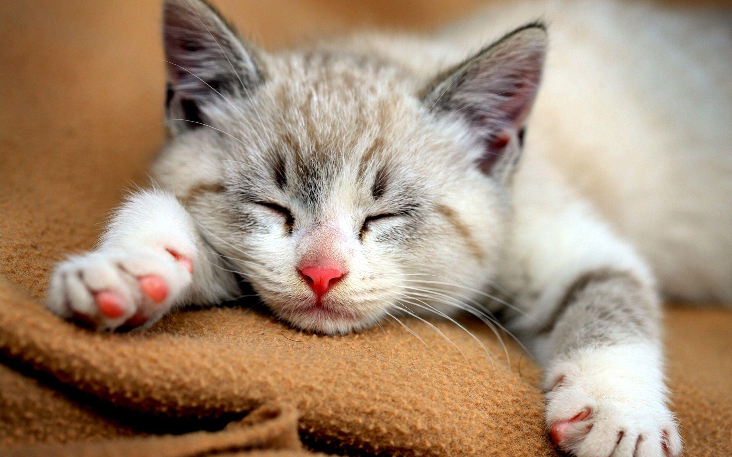 بالصور صور قطط مضحكة صور قطط تجنن , اجمل صورة لقطة تفطس من الضحك 4540 6