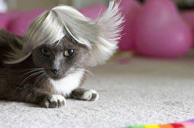 بالصور صور قطط مضحكة صور قطط تجنن , اجمل صورة لقطة تفطس من الضحك 4540 7