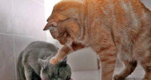 صور قطط مضحكة صور قطط تجنن , اجمل صورة لقطة تفطس من الضحك
