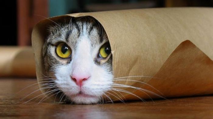 بالصور صور قطط مضحكة صور قطط تجنن , اجمل صورة لقطة تفطس من الضحك 4540