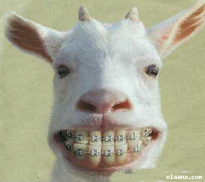 بالصور صور اجمل صور مضحكة صور تموت من الضحك , بوستات لترسم البسمة علي وجوهكم 4549 1