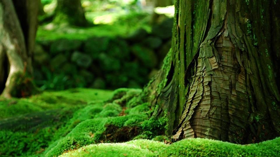 بالصور صور طبيعية صور جمال الطبيعة , خلفيات مناظر روعه 3811 7