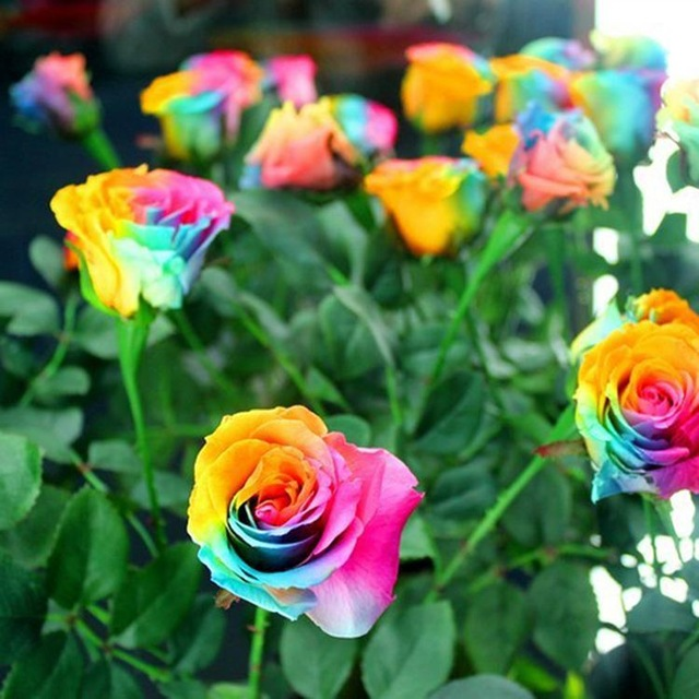 بالصور صور ورد طبيعى صور ورد حلو صور الورد طبيعى , خلفيات للزهور الطبيعية 3825 3