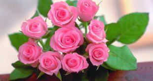 صوره صور ورد طبيعى صور ورد حلو صور الورد طبيعى , خلفيات للزهور الطبيعية