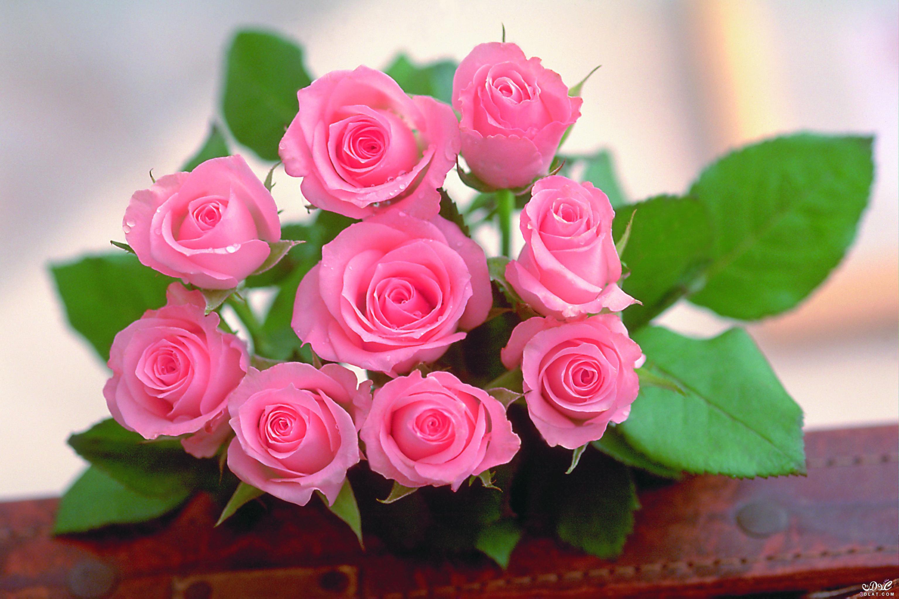 صورة صور ورد طبيعى صور ورد حلو صور الورد طبيعى , خلفيات للزهور الطبيعية