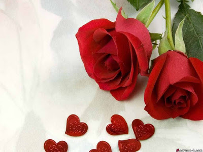 بالصور صور ورود روعه , lovely roses photos 3966 2