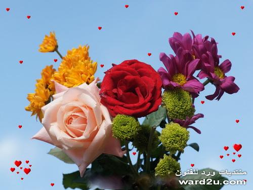 بالصور صور ورود روعه , lovely roses photos 3966 8