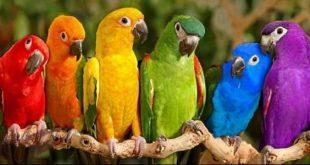 بالصور صور ببغاوات اجمل صور طيور صور عصافير روعه , احلي بوستات للعصفور 4004 10 310x165