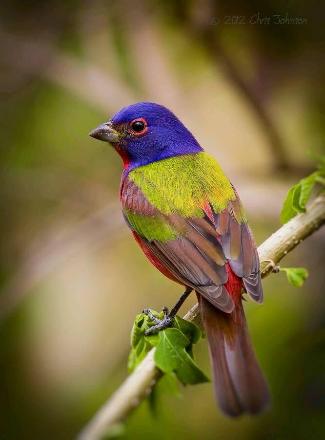 بالصور صور ببغاوات اجمل صور طيور صور عصافير روعه , احلي بوستات للعصفور 4004 3