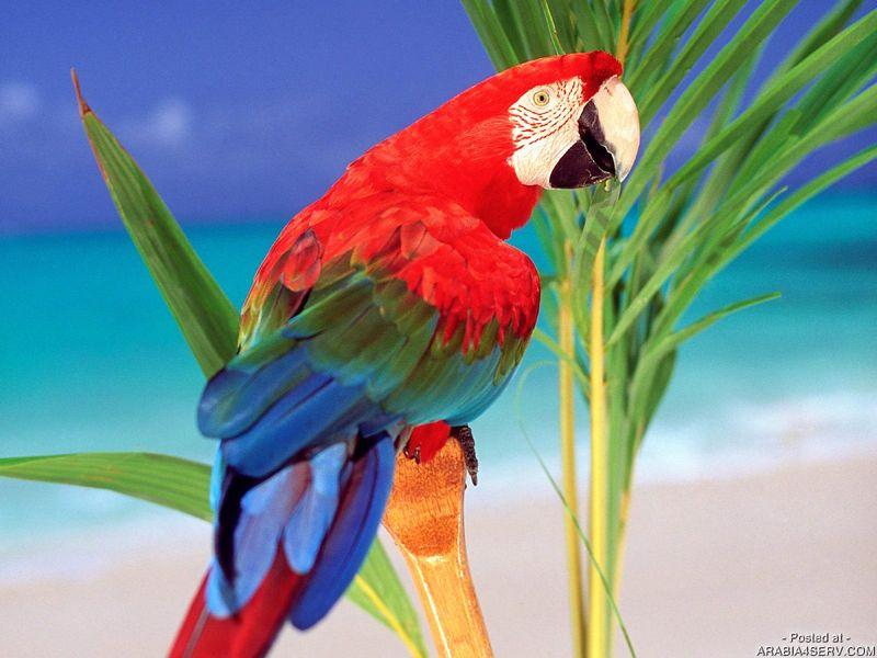 بالصور صور ببغاوات اجمل صور طيور صور عصافير روعه , احلي بوستات للعصفور 4004 6