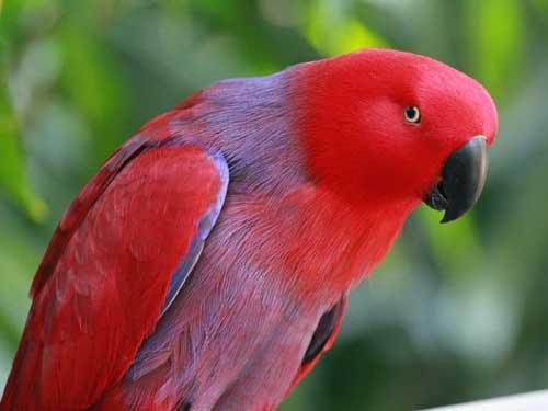 بالصور صور ببغاوات اجمل صور طيور صور عصافير روعه , احلي بوستات للعصفور 4004 7