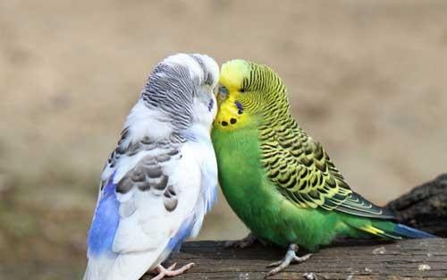 بالصور صور ببغاوات اجمل صور طيور صور عصافير روعه , احلي بوستات للعصفور 4004 8