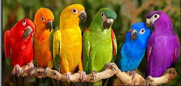 صوره صور ببغاوات اجمل صور طيور صور عصافير روعه , احلي بوستات للعصفور