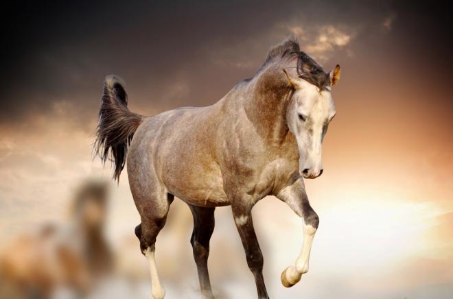 صور صور الخيل , صور الخيل اجمل صور الحصان