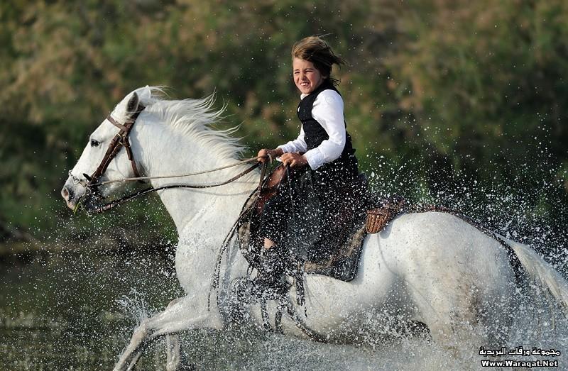 بالصور صور الخيل , صور الخيل اجمل صور الحصان 4190 5