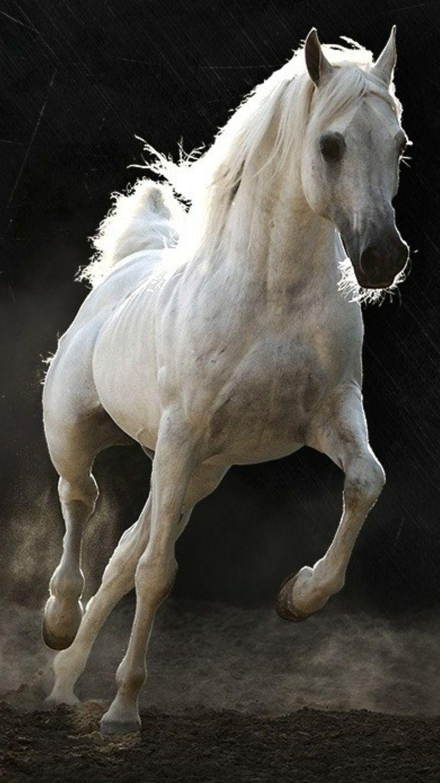 بالصور صور الخيل , صور الخيل اجمل صور الحصان 4190 6