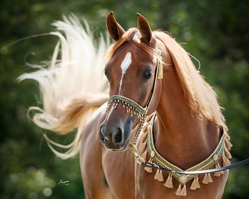 بالصور صور الخيل , صور الخيل اجمل صور الحصان 4190 7