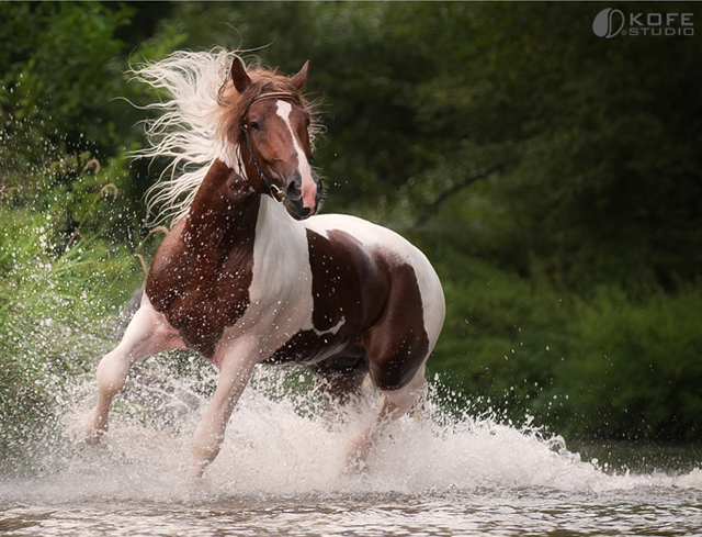 بالصور صور الخيل , صور الخيل اجمل صور الحصان 4190 8