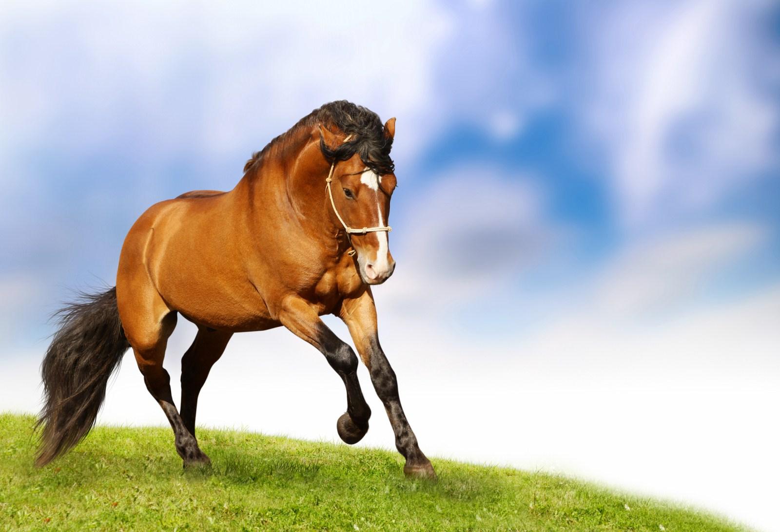 بالصور صور الخيل , صور الخيل اجمل صور الحصان 4190 9